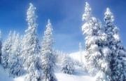 О погоде 17-20 января