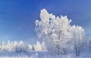 О погоде 18 - 22 января