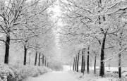 О погоде 20 - 24 февраля