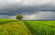 О погоде 24 - 28 июля