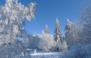 О погоде 30 января - 3 февраля