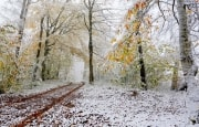 Погода на конец октября