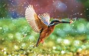 Погода и птицы