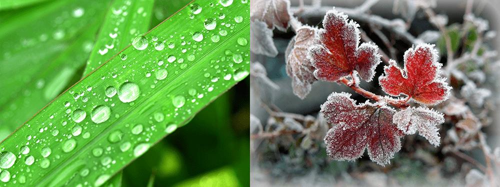Наземные осадки: роса и иней